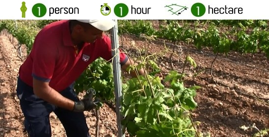 It improves and humanizes vineyard tasks, reducing labor up to an 80%