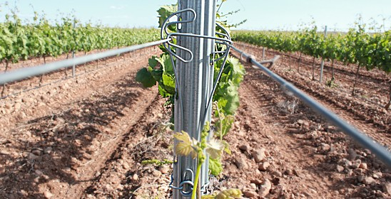 Especially designed to avoid damage to the plants during mechanical harvesting and pre-pruning