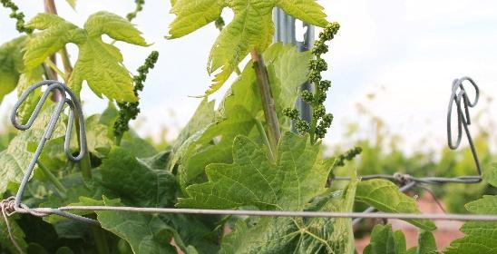 NEOVID melhora a saúde da planta e o rendimento de seus tratamentos.